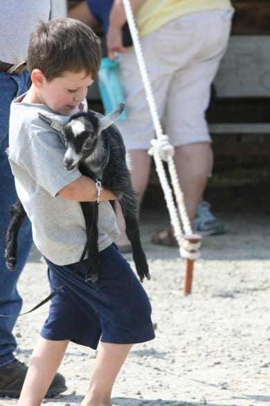 File photo. A child carries a goat at the 4-H Youth Show